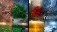 Doğum Tarihinize Göre Hangi Ağaçsınız ?