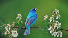 Mavi Kuş Kişilik Testi