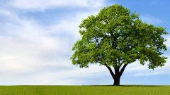 Kahve Falında Ağaç Görmek