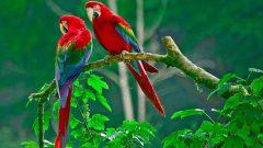 Kahve Falında Papağan Görmek