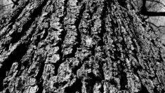 Kahve Falında Ağaç Kütüğü