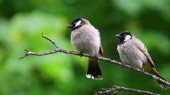 Kahve Falında Ağaçta Kuşlar