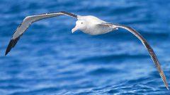 Kahve Falında Albatros