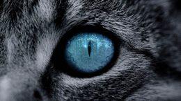 Kahve Falında Kedi Gözü