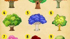 Bir Ağaç Seçin Kişiliğinizi ve Sizi Neler Beklediğini Öğrenin