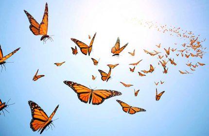 Kelebeklerden Birini Seçin Bilinçaltınızda Yatan Bilinmezleri Keşfedin
