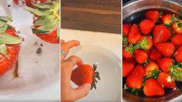 Gıda Mühendisi Popüler Çilek Deneyi Hakkında Uyardı