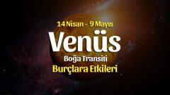 Venüs Boğa Transiti Burç Yorumları – 14 Nisan 2021
